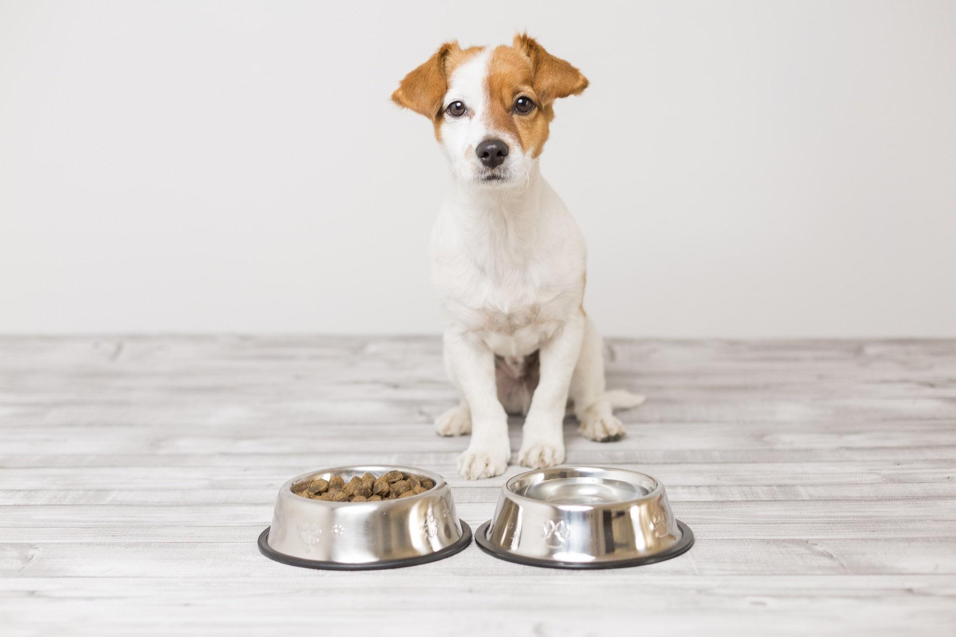 czego nie może jeść pies