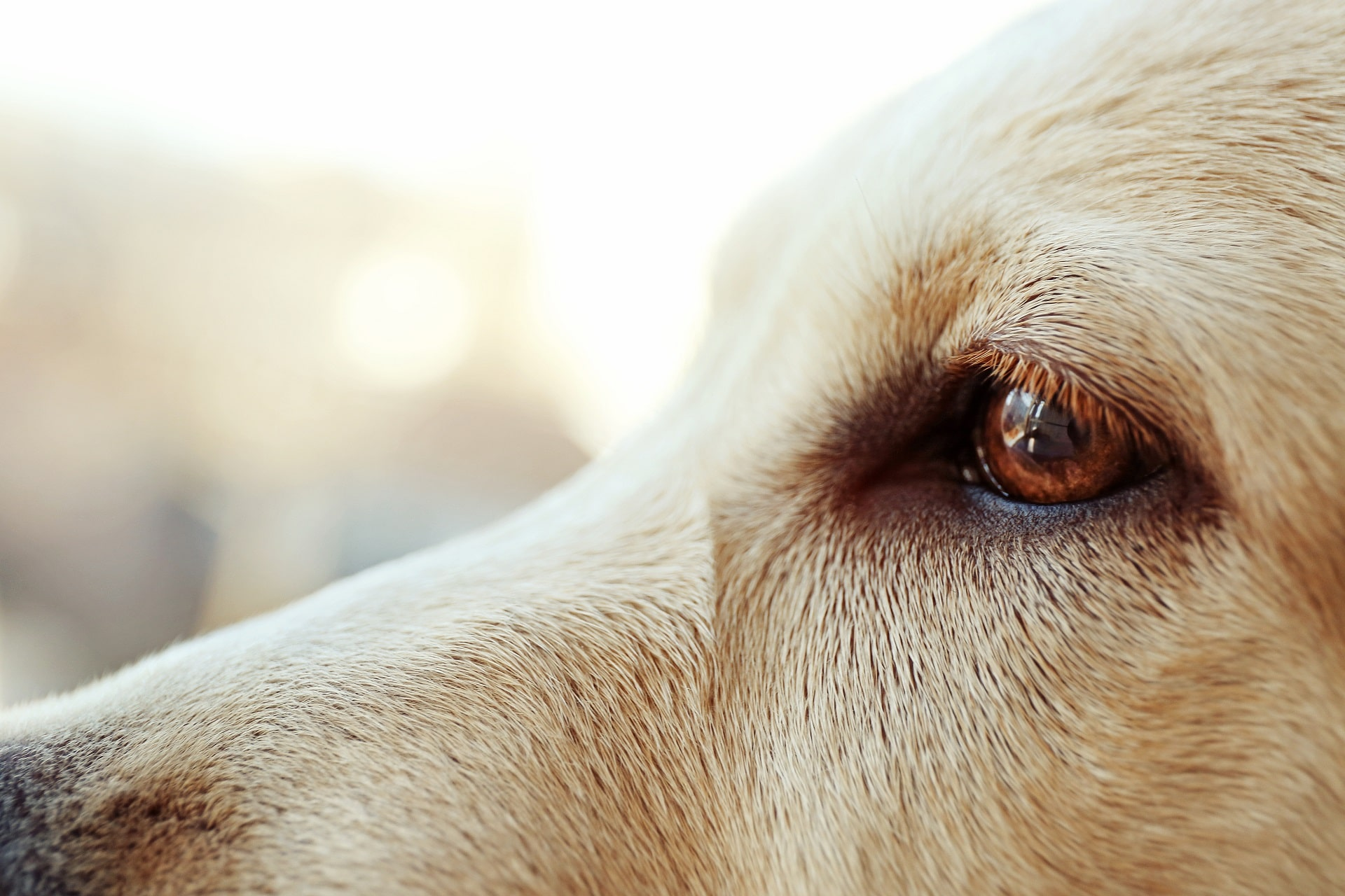 czy psy widzą kolory