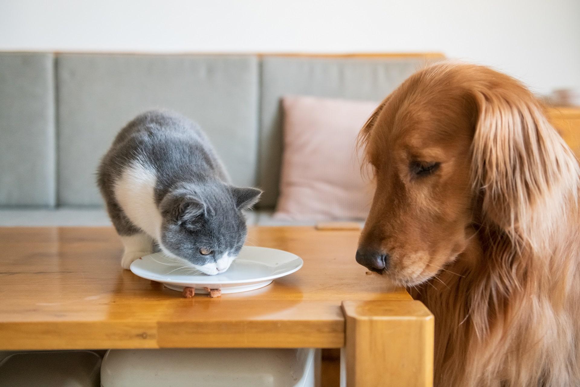 czym nie wolno karmić psa