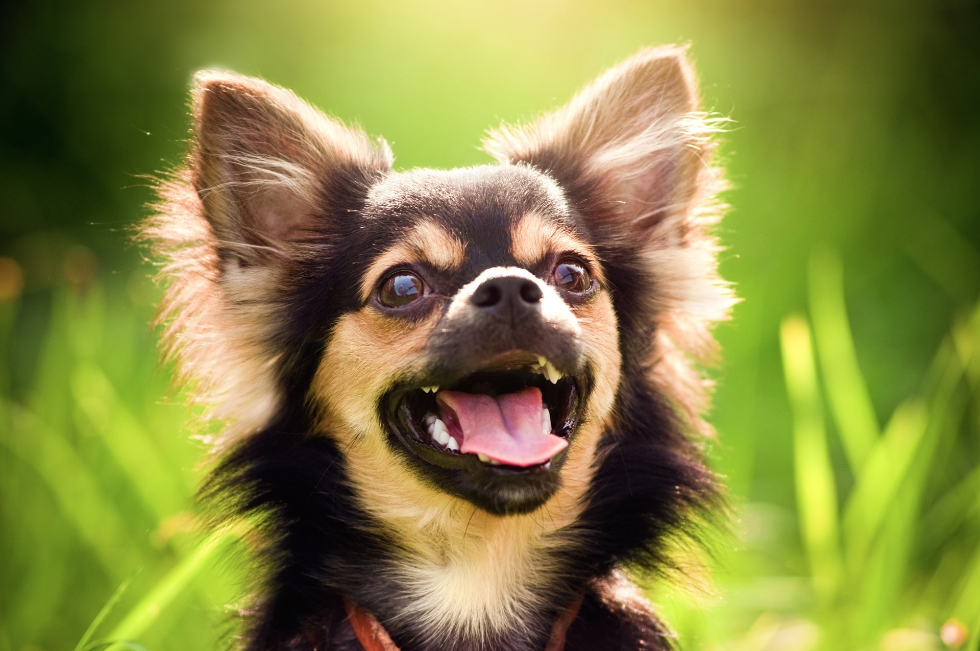 długość życia psa