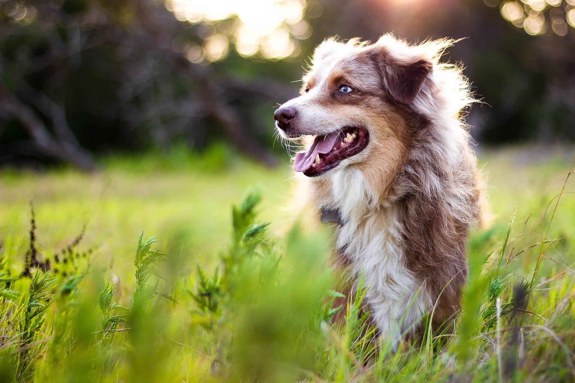 najdłużej żyjący pies