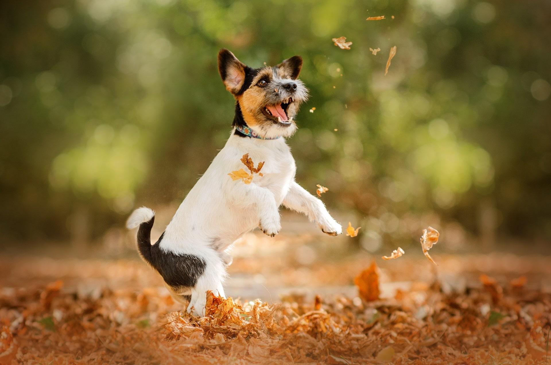 które psy żyją najdłużej