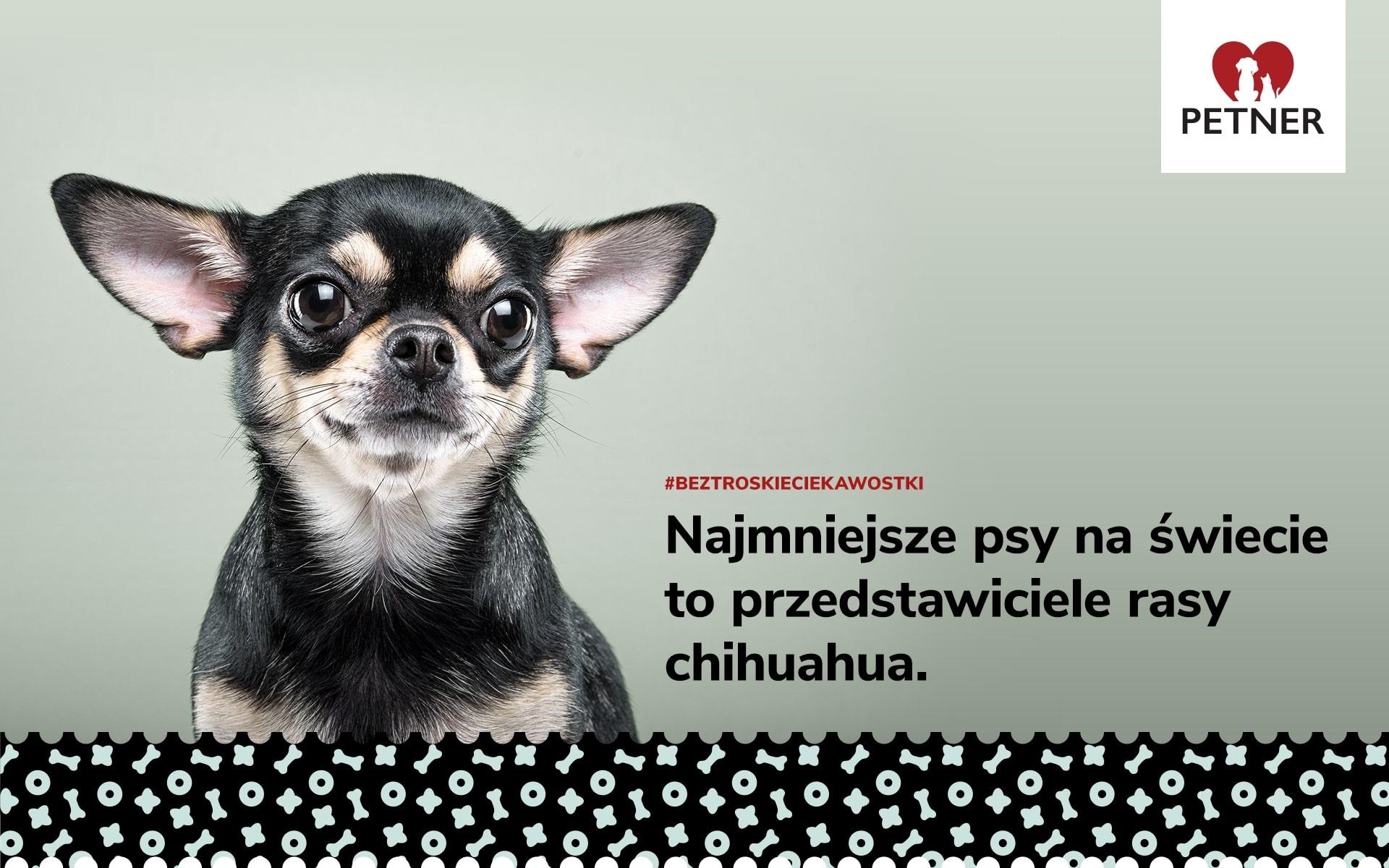 najmniejsze psy na świecie