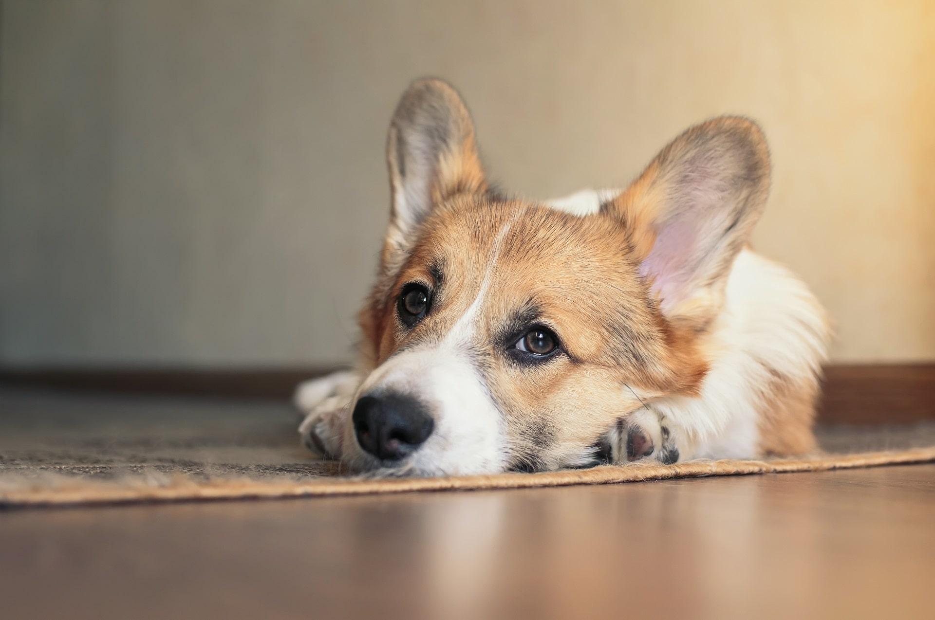 anemia u psa leczenie
