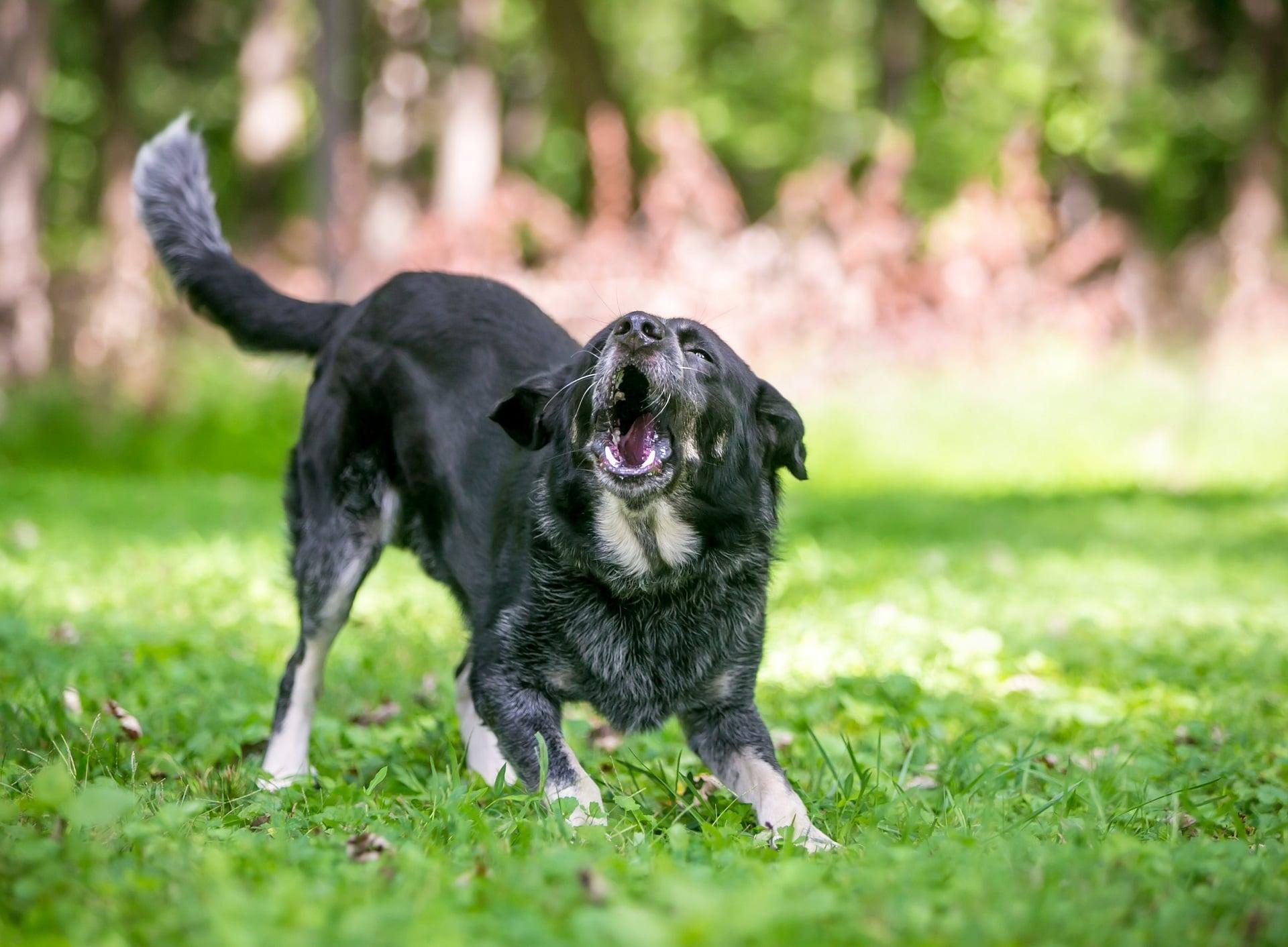 jak oduczyć psa atakowania innych psów