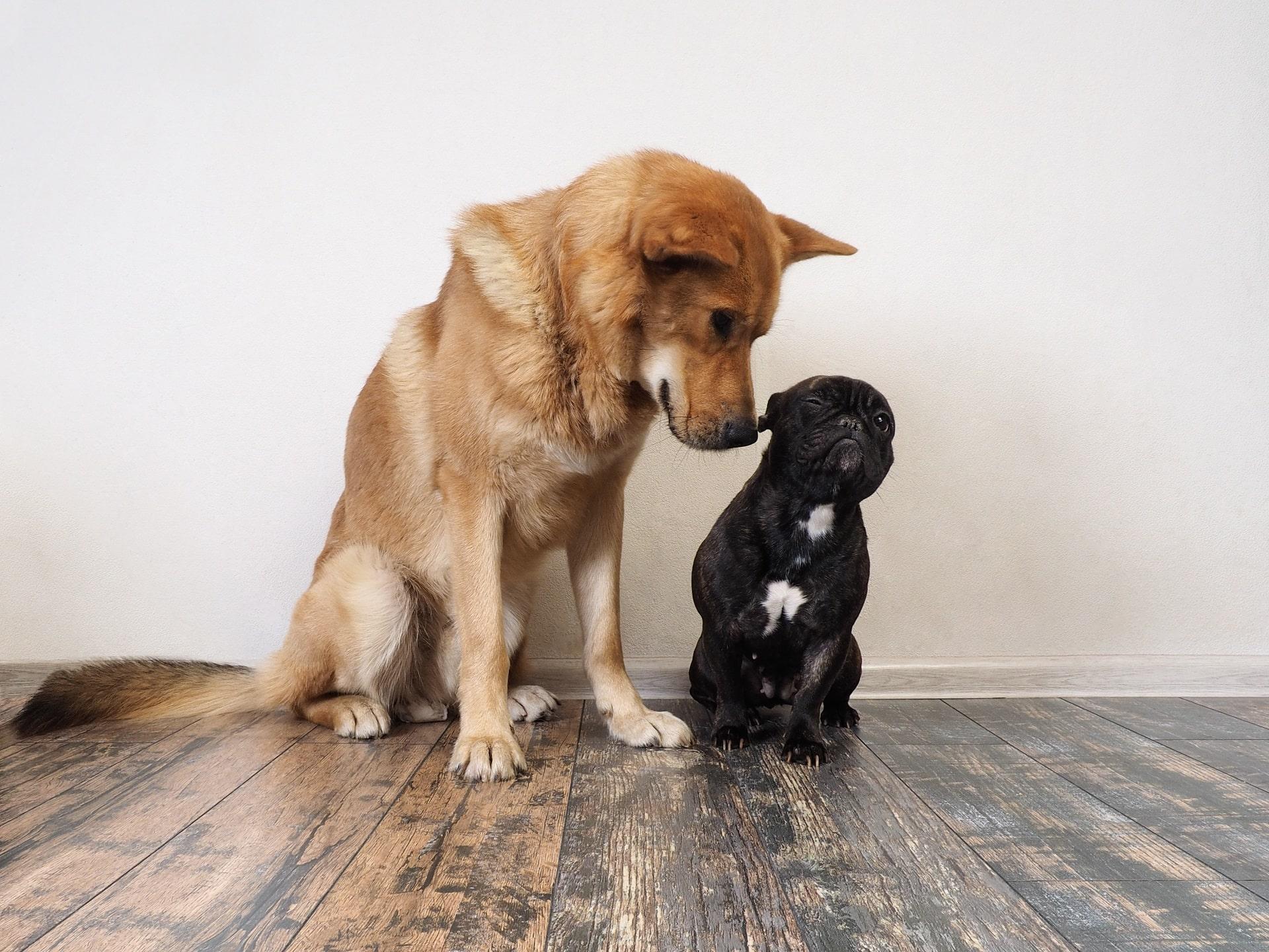pies jest zazdrosny o drugiego
