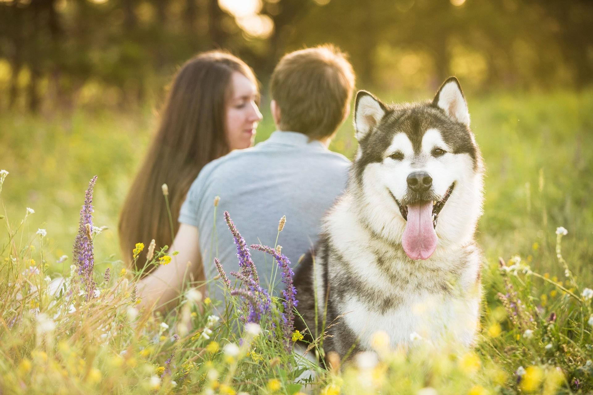 pies zazdrosny o partnera