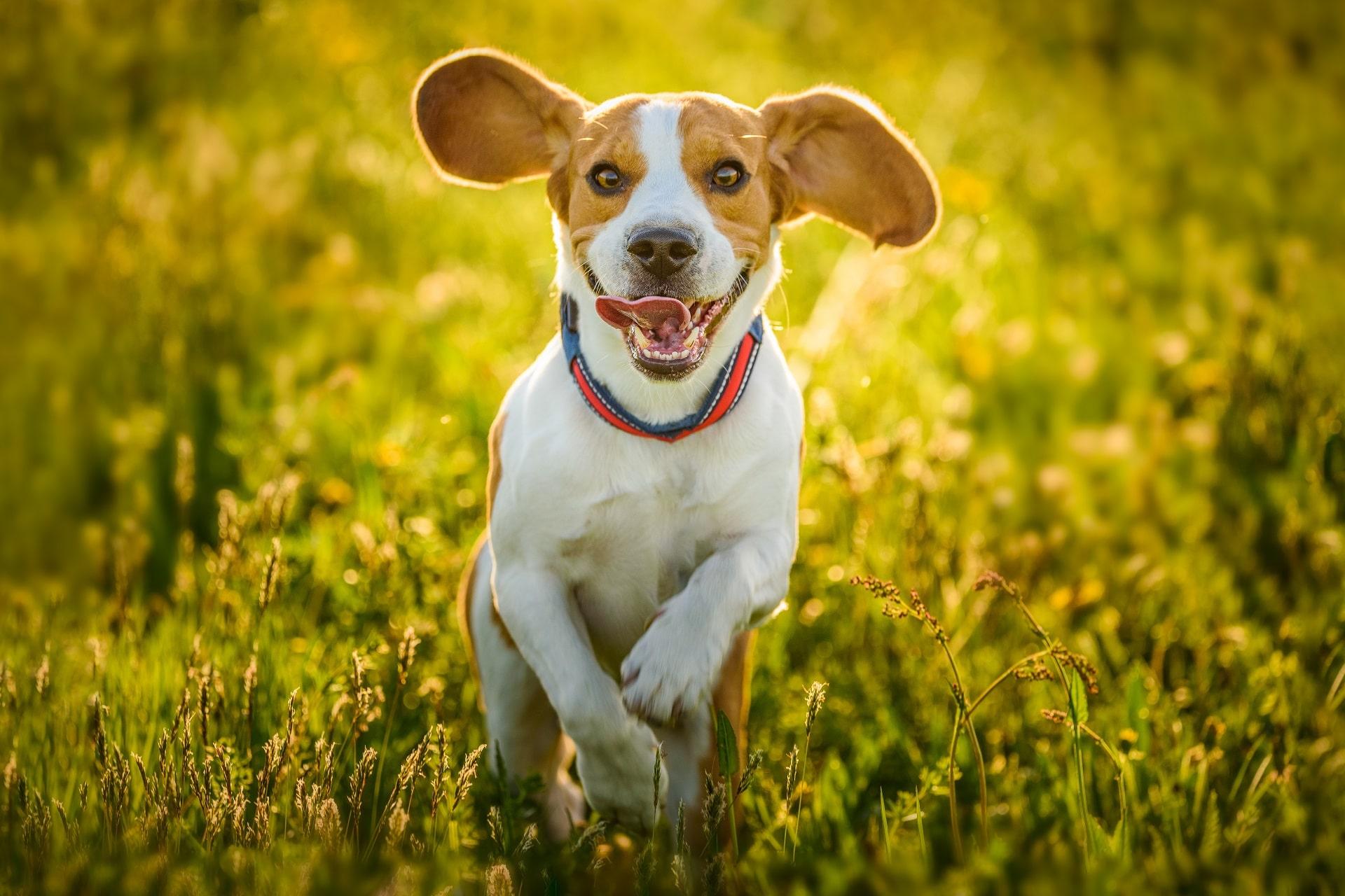 witamina d dla psa