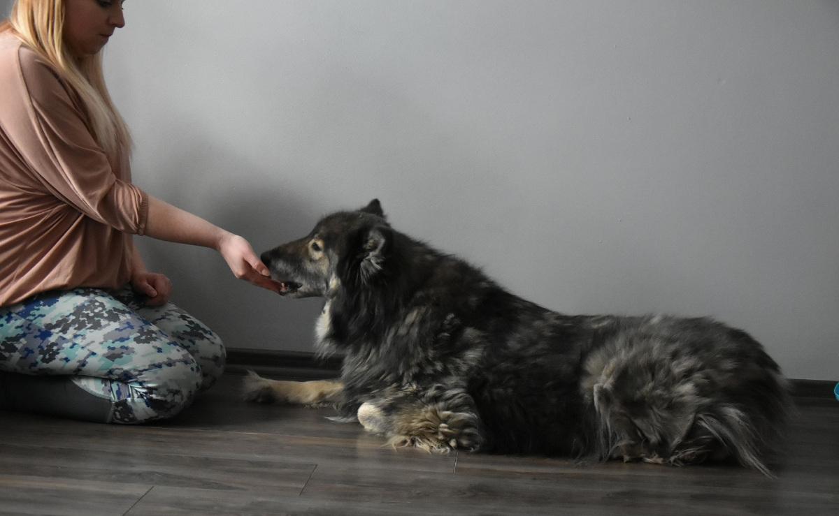 nagroda dla psa
