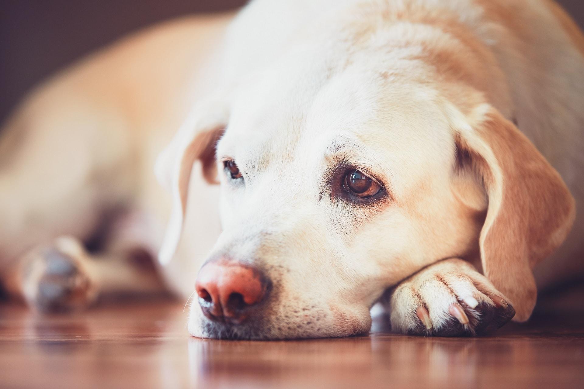 co na zatwardzenie u psa