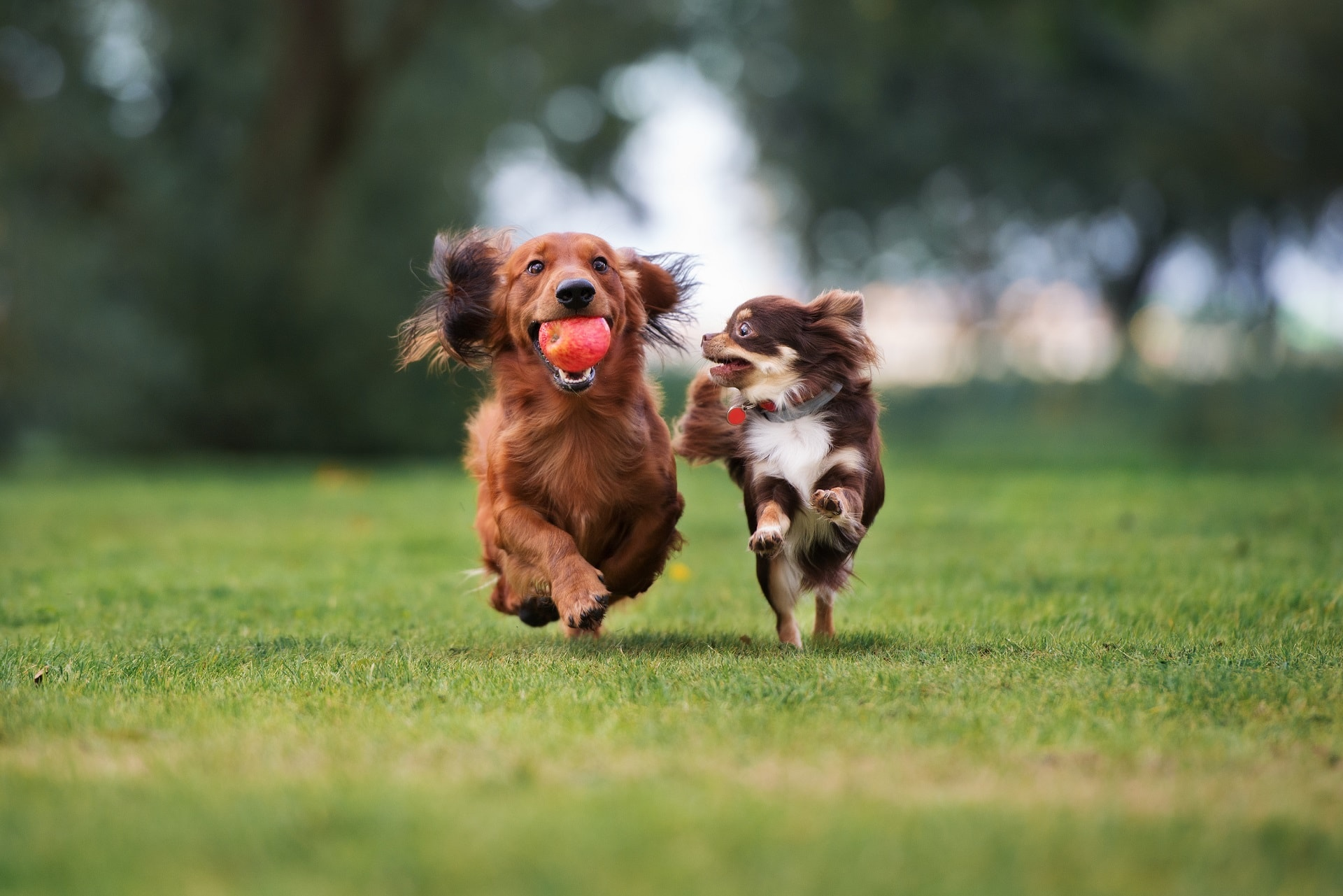 dwa psy w domu