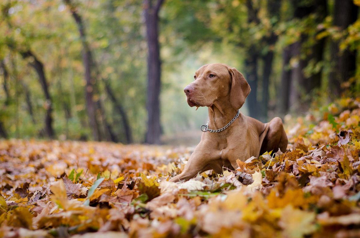 jak nauczyć psa leżeć
