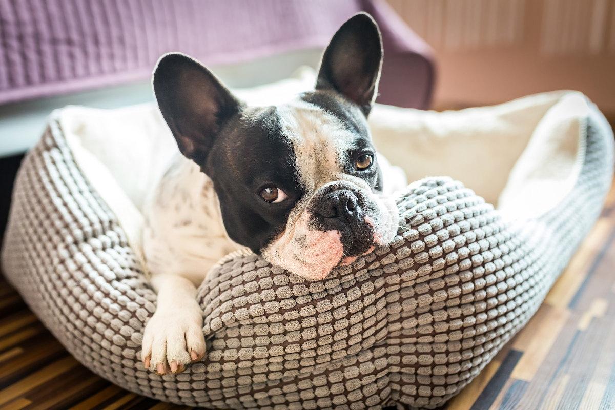 jak nauczyć psa leżeć w legowisku