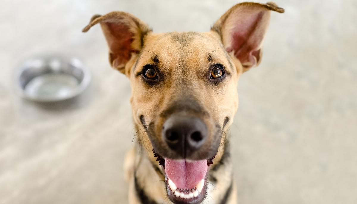 karmić psa przed czy po spacerze