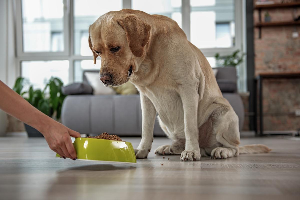 karmienie psa ile razy dziennie