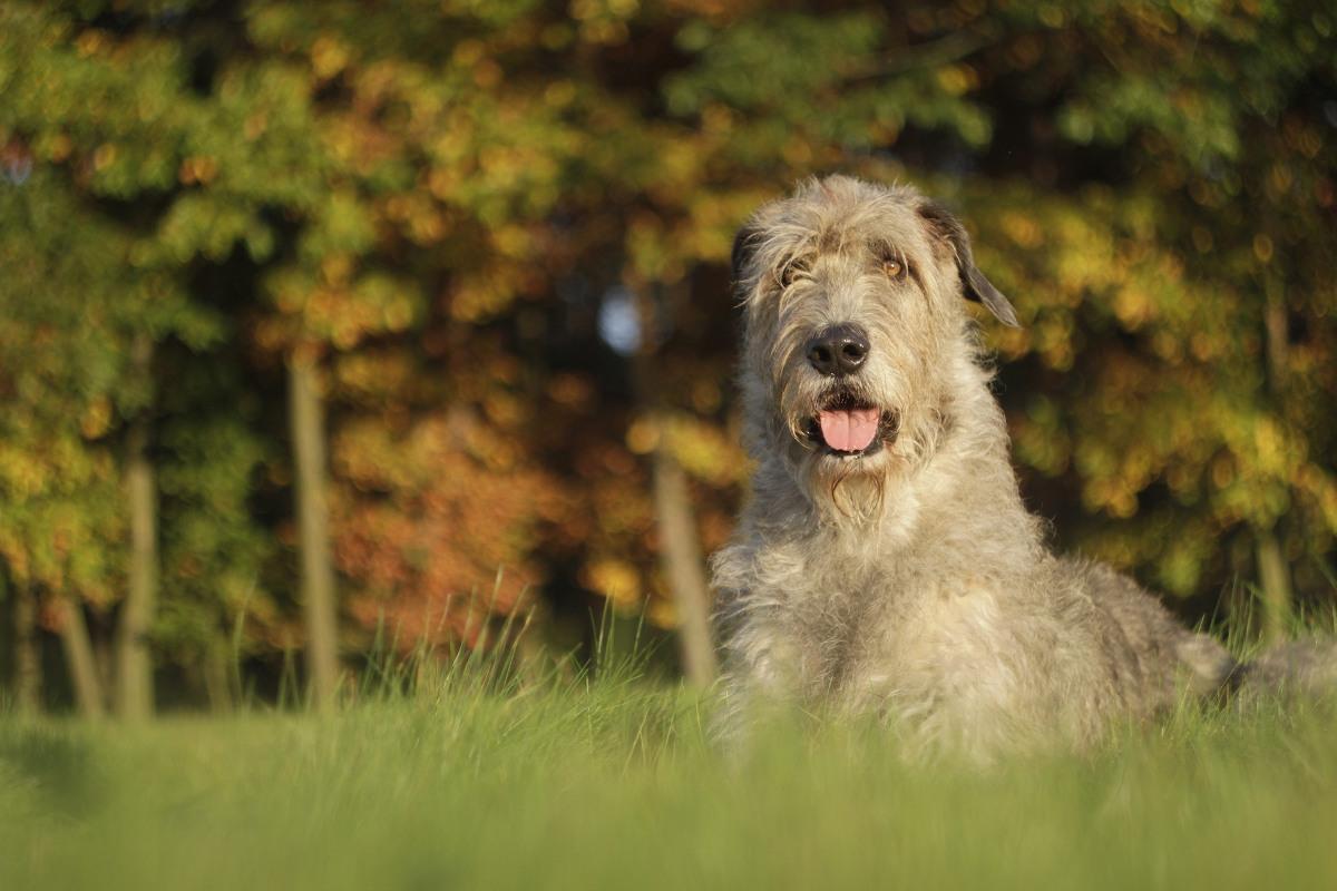 najdroższe psy na świecie