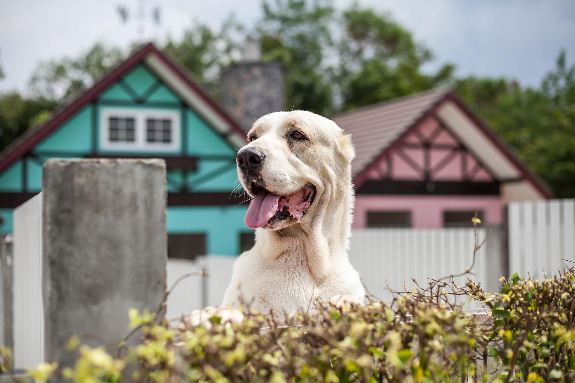 psy obronne i stróżujące