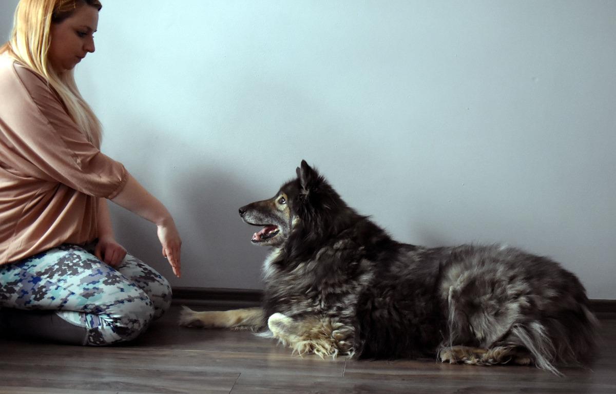 trening psów