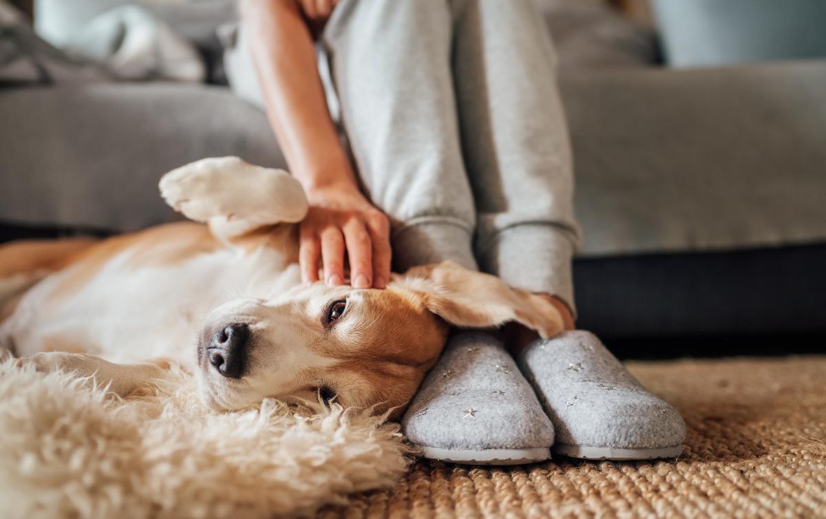 dlaczego psy lubia spac w nogach