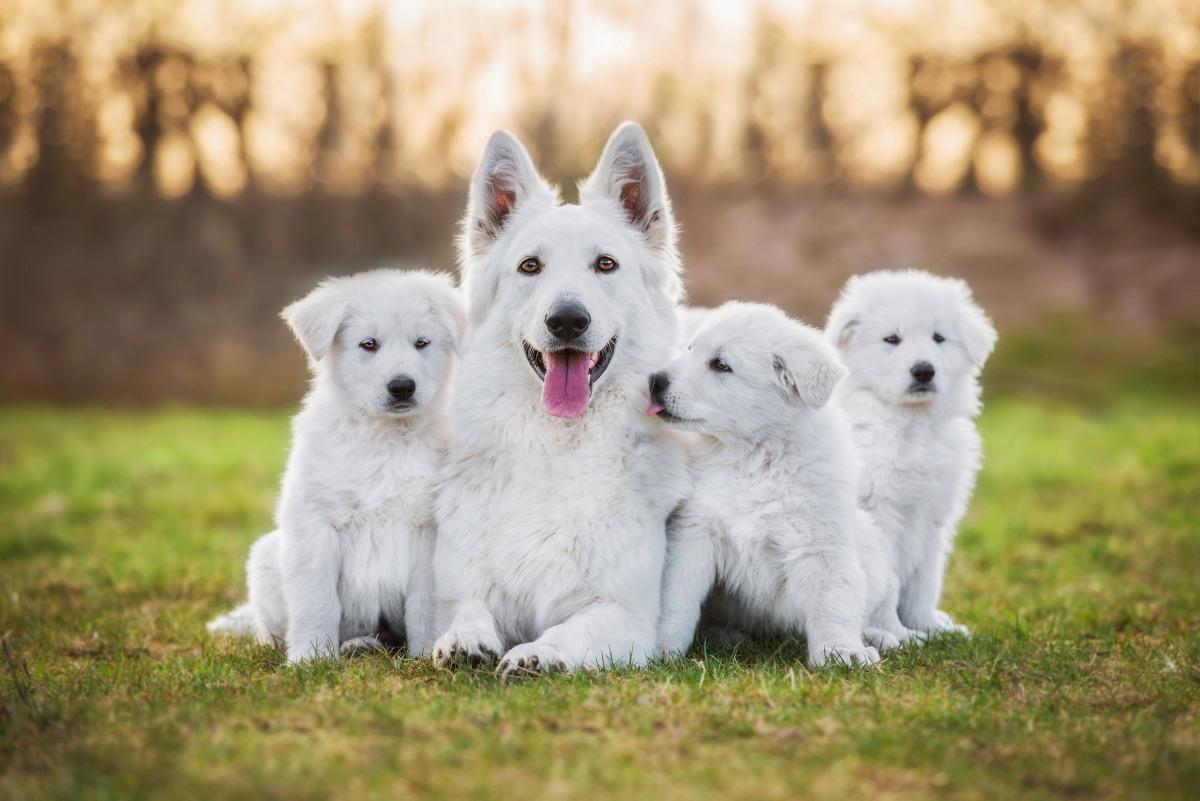 do jakiego wieku rosną psy