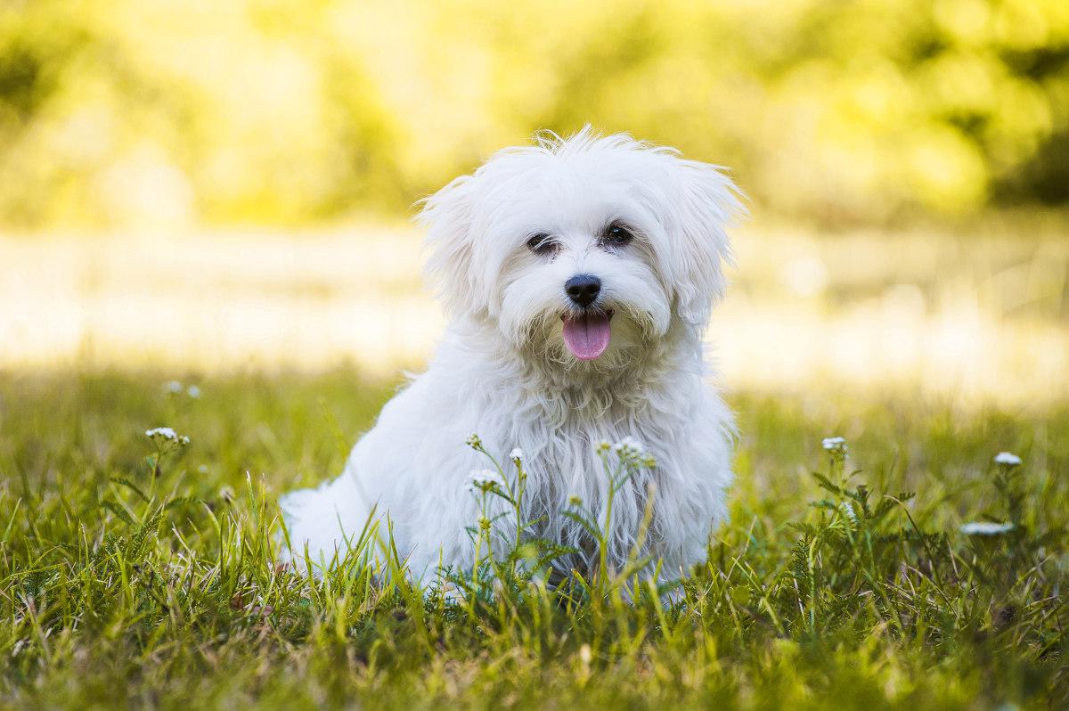 etapy rozwoju psa