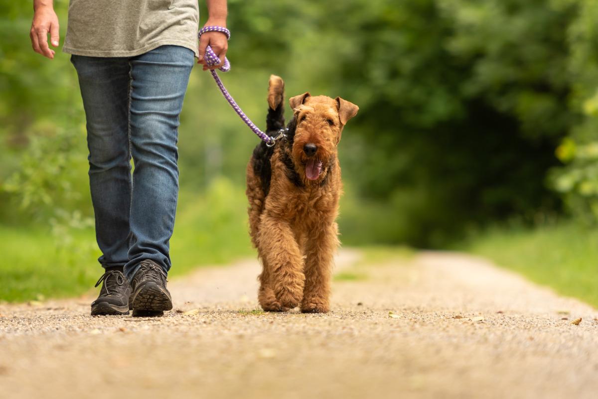 jak nauczyć psa chodzenia przy nodze