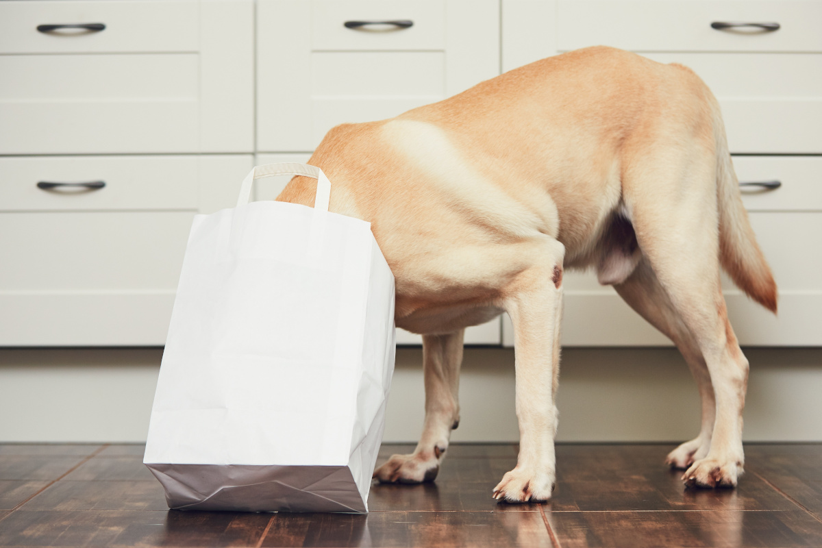 niepohamowany apetyt u psa