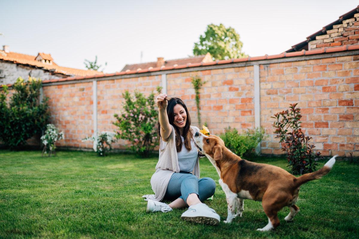 objawy ciąży urojonej u psa