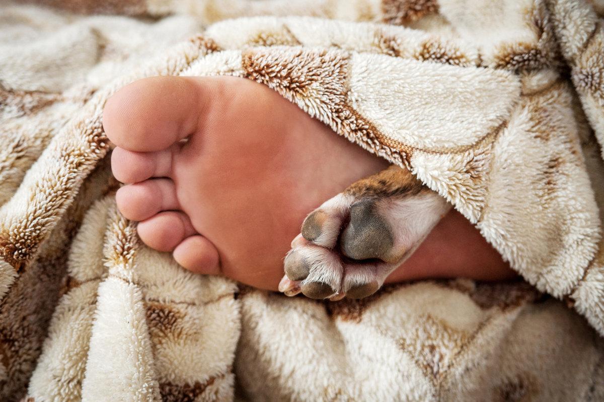 pies kładzie się na stopach