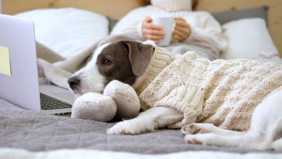 pies śpi w nogach