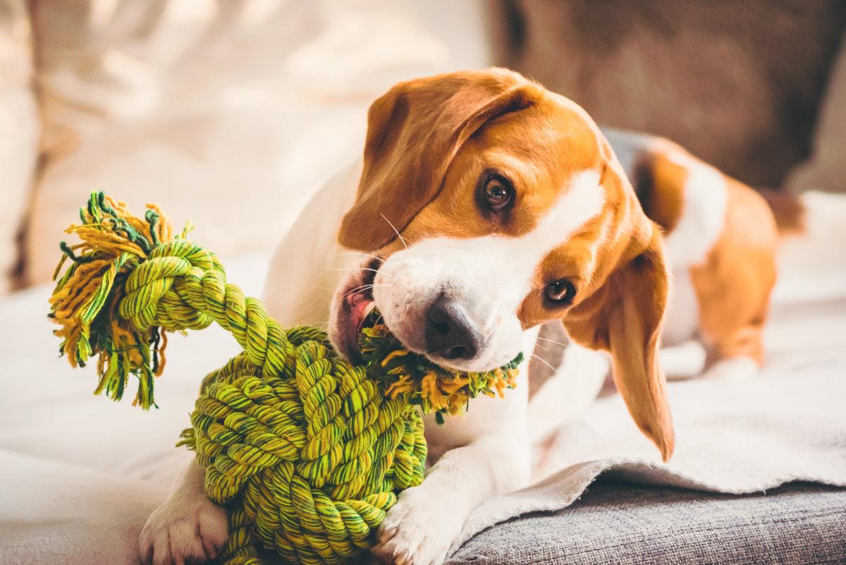 zabawy z psem w domu