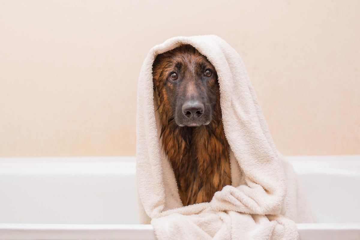 jak często kąpać psy