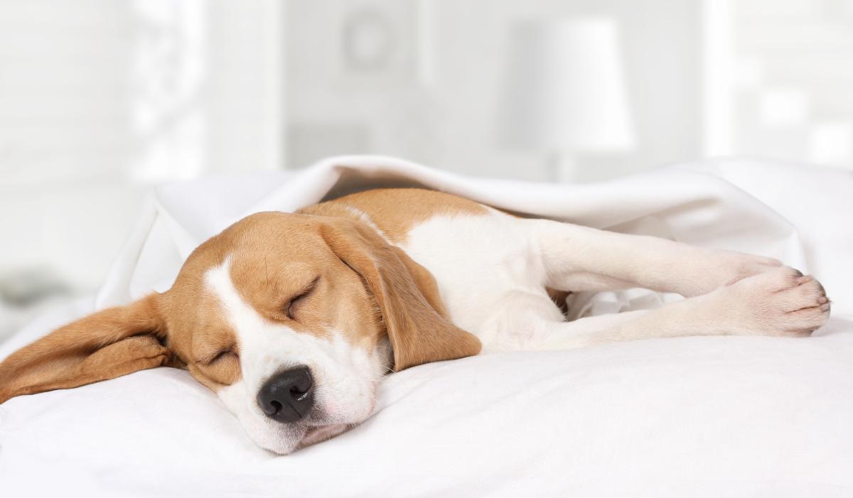 o czym śnią psy
