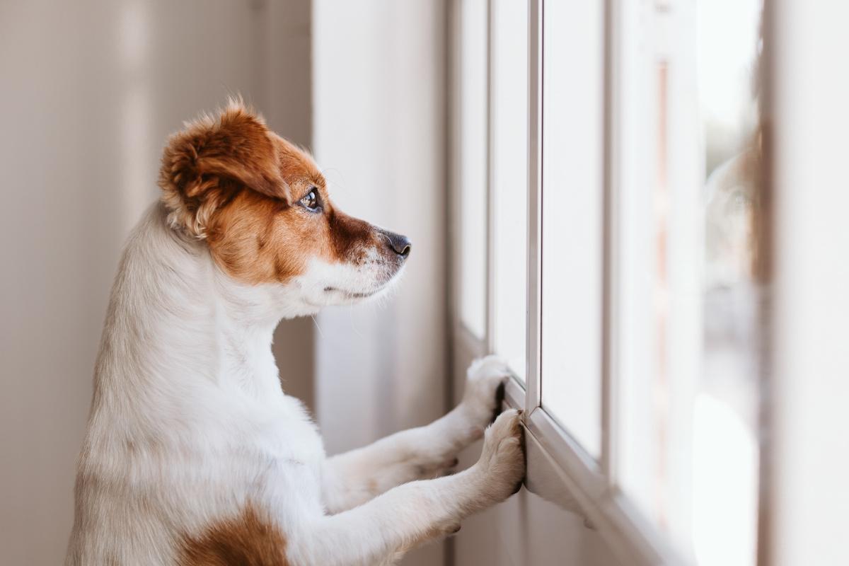 lęk separacyjny u psa jak sobie radzić