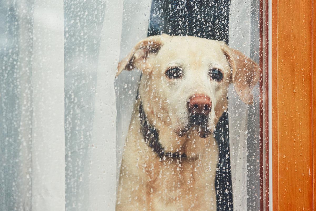 lęk separacyjny u psa objawy