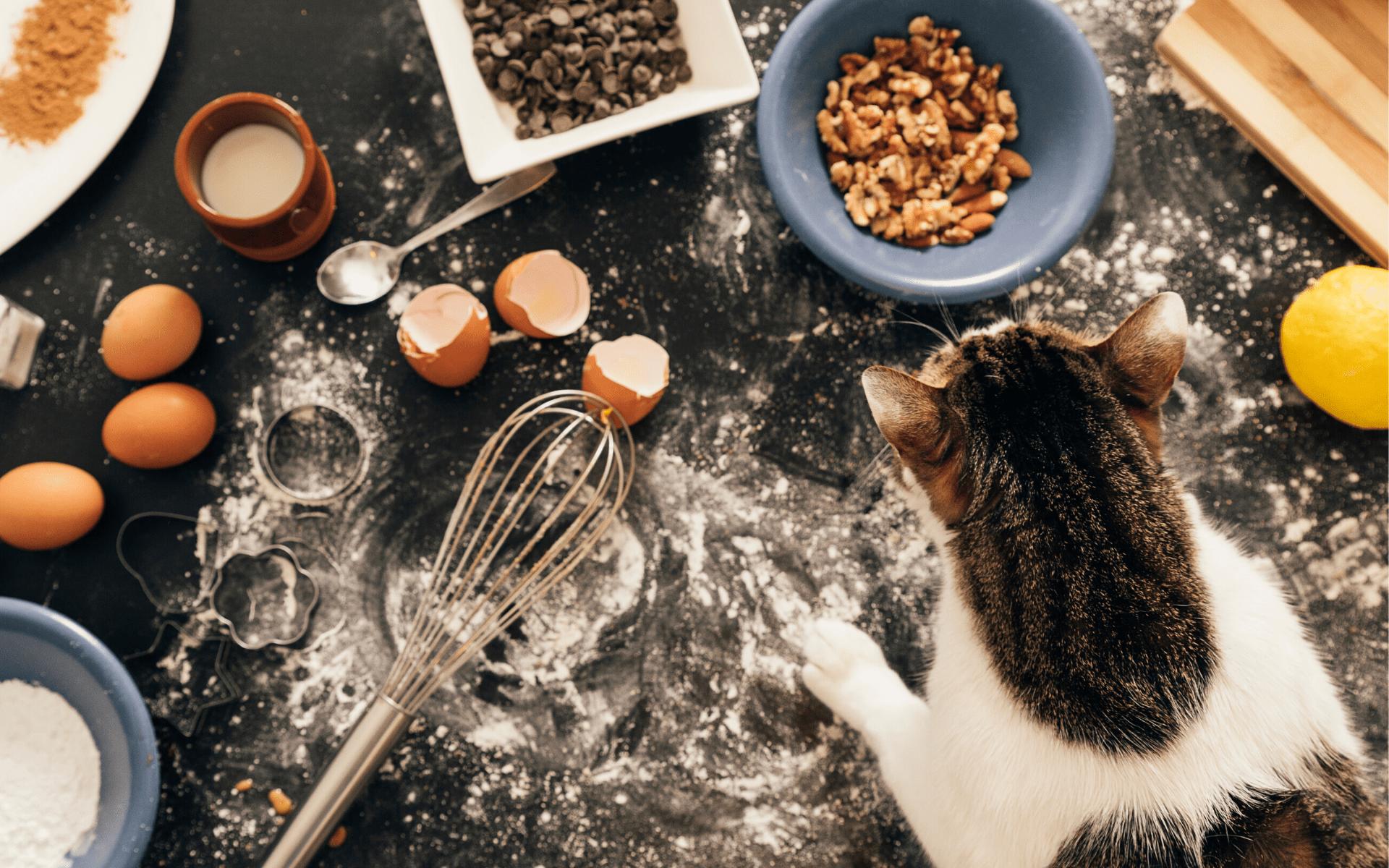 czego nie mogą jeść koty