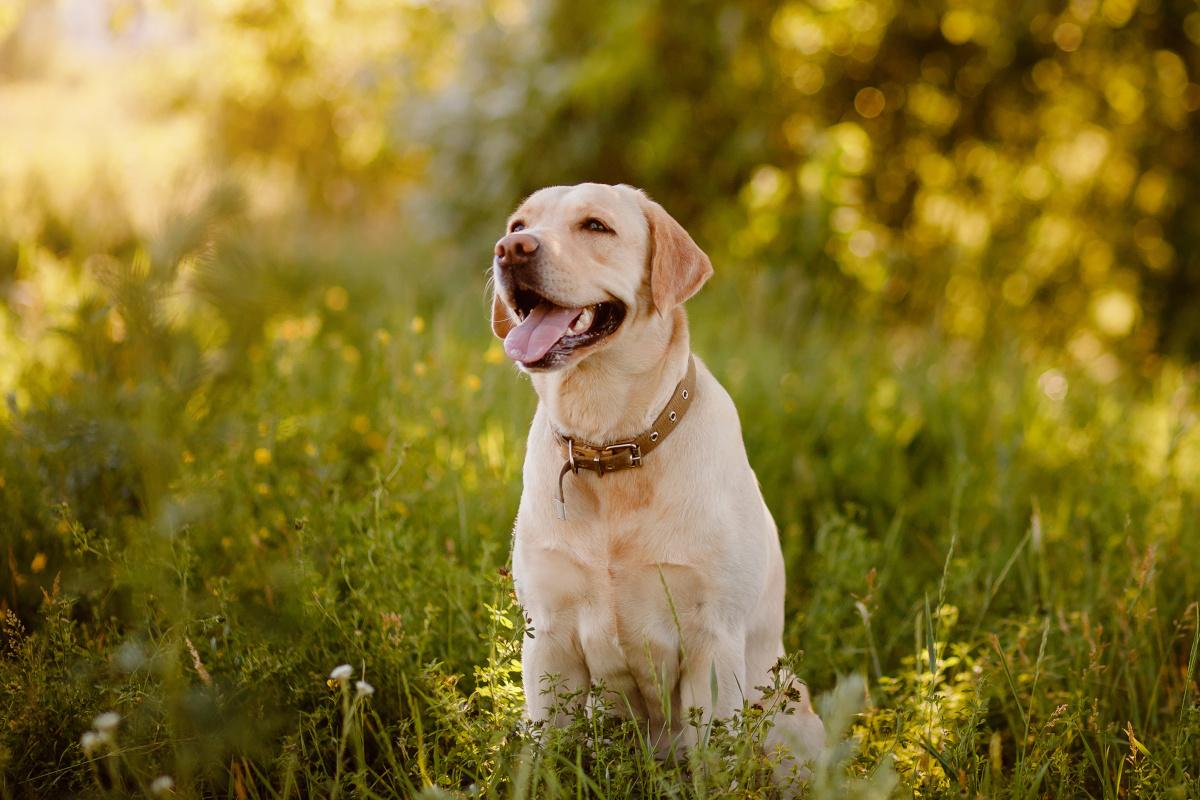 mądre rasy psów