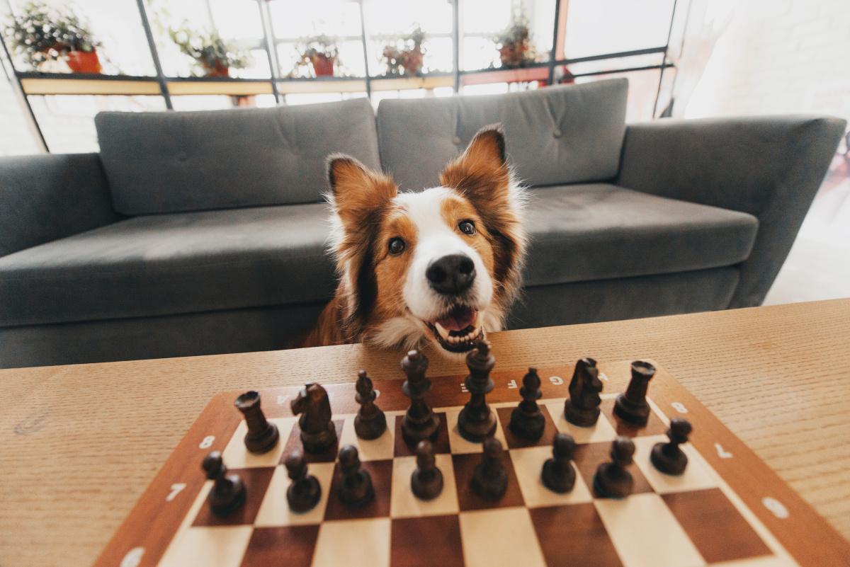 ranking najmądrzejszych ras psów