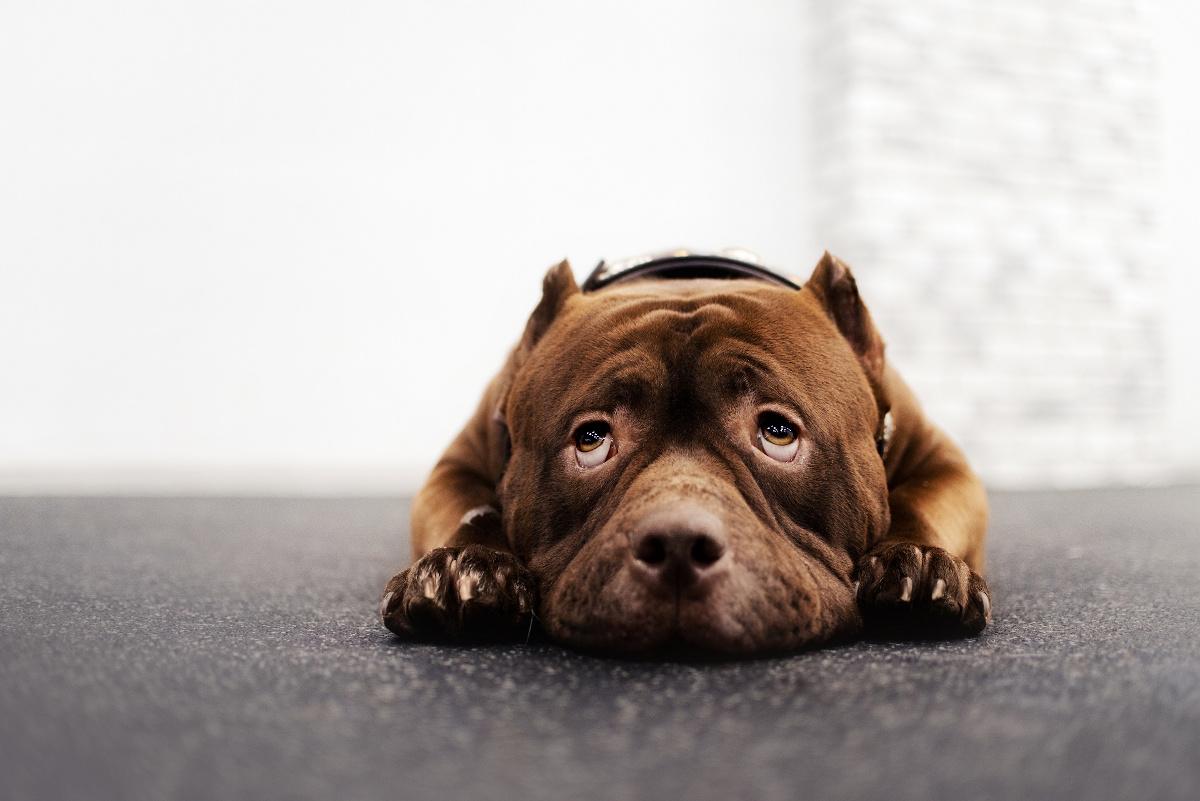alergia u psa objawy