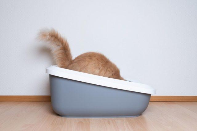 biegunka u kota