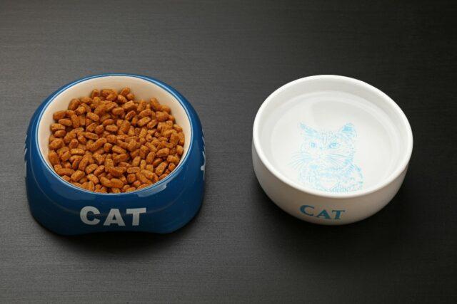 jak żywić kota?