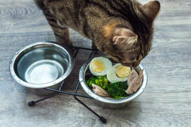 co mogą jeść koty