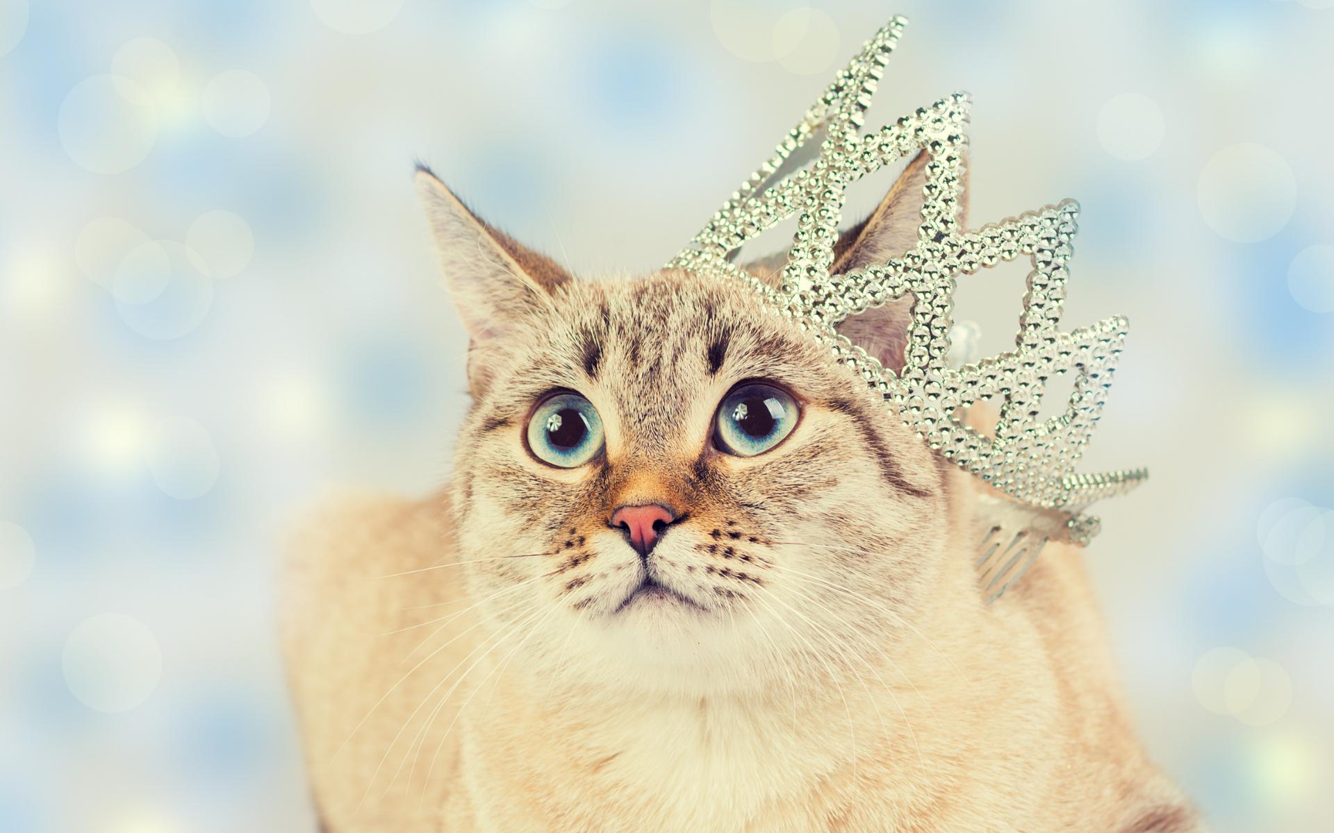 najdroższe koty