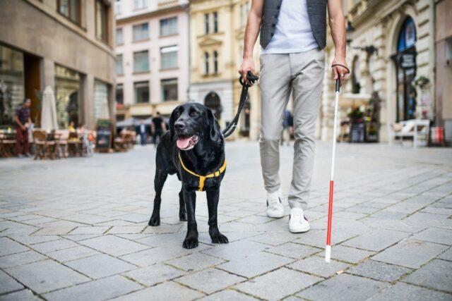 pies dla niewidomych