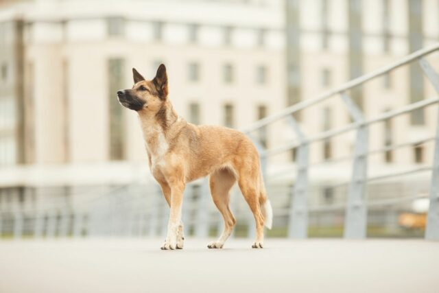 pies w bloku