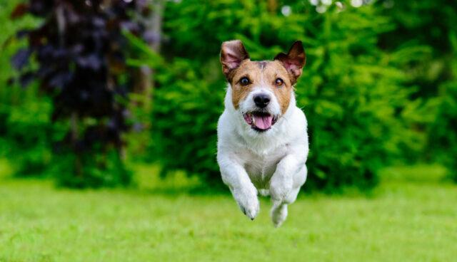 jak oduczyc psa skakania?