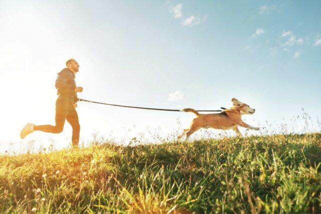 pies do  biegania