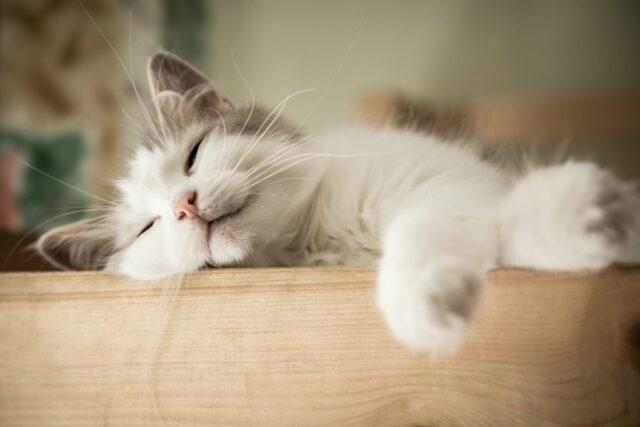ile śpią koty