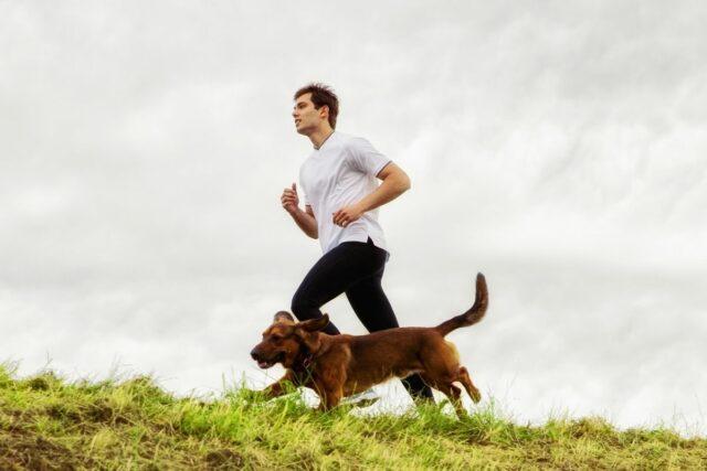 psy dla biegaczy