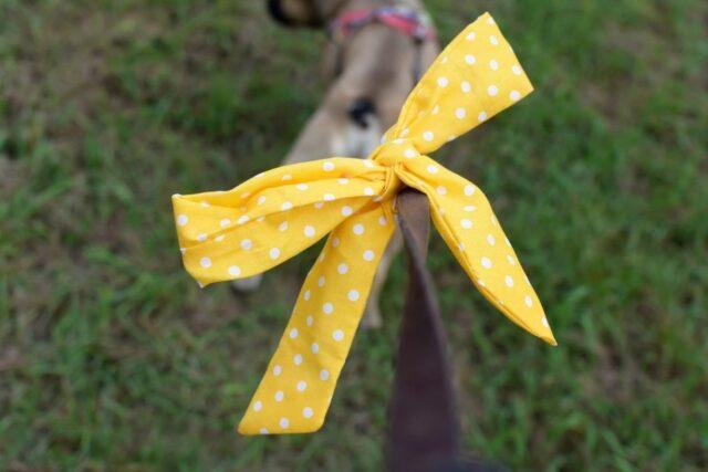 żółta wstążka u psa